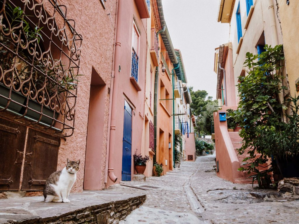 Collioure - Le Lapin Jaune Photographies